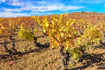 Vineyard at Rioja Alavesa, Basque Country, Spain
