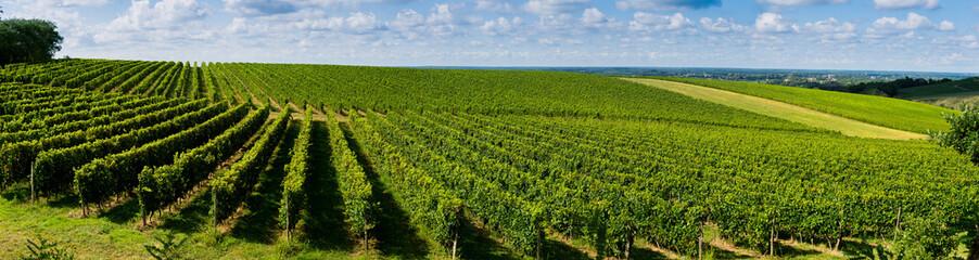 Papiers peints Vignoble Sunset, Landscape, Bordeaux Wineyard, France