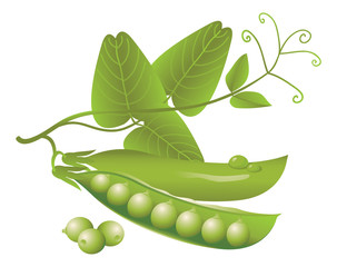 Vector logo design realistic green pea pods, tendrils and leaves on a white background. Fresh vegetables or food icon.