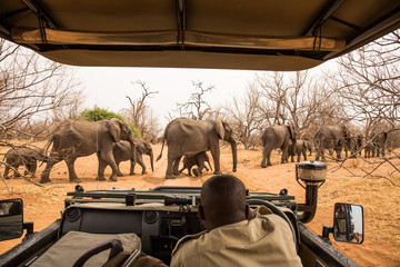 Foto op Canvas Afrika observing Elephants crossing the road, Chobe River, Chobe National Park