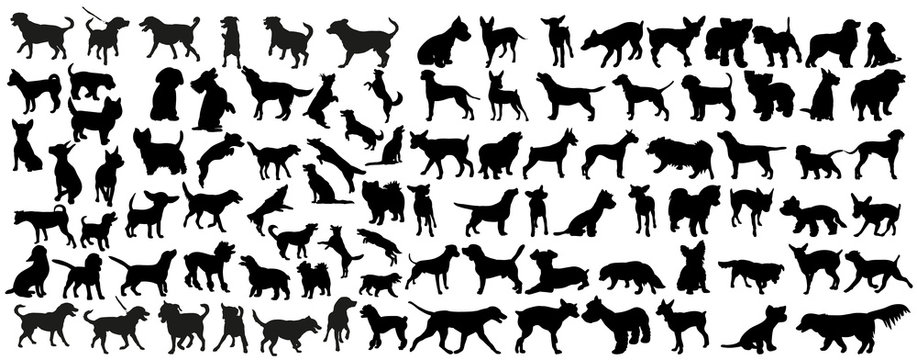 vector, isolated black silhouette of a dog, collection