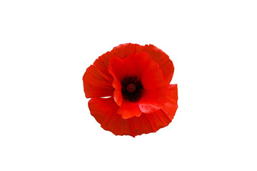 Foto op Canvas Klaprozen Red poppy flower isolated on white background