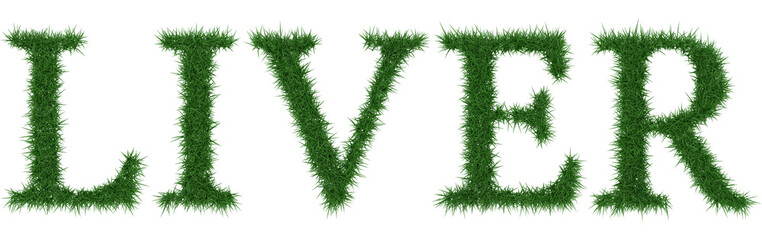 Liver - 3D rendering fresh Grass letters isolated on whhite background.