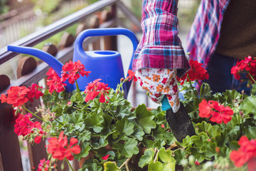 Watering can and red geranium
