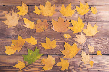 Autumn leaves on rustic wooden background.