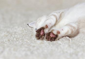 cute kitten is sleeping on a fluffy carpet