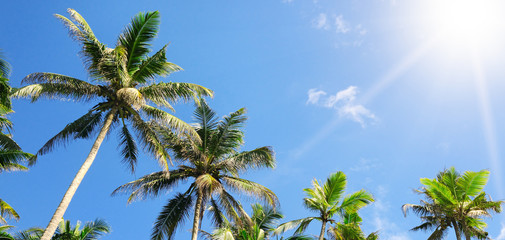 palm trees against the blue sky and sun