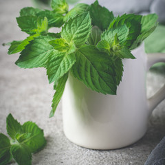 Fresh mint in white mug closeup on a gray background