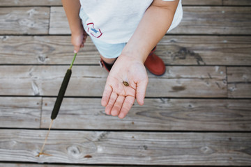 High angle view of boy holding snail while standing on boardwalk