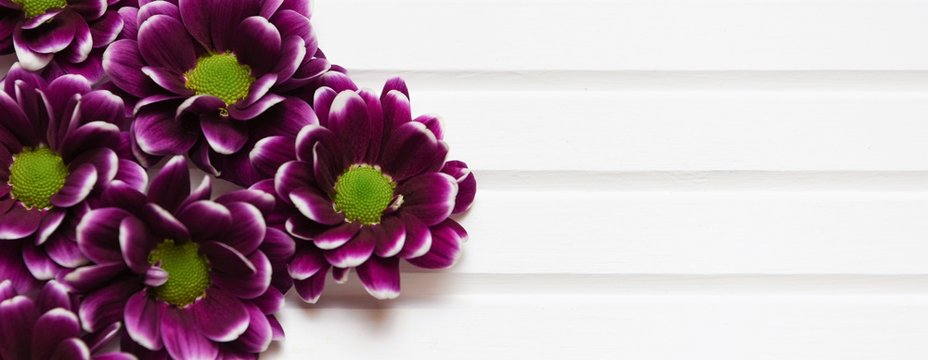 purple flowers with white tip on white wood
