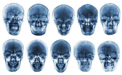 Collection of asian skull . front view  . isolated background