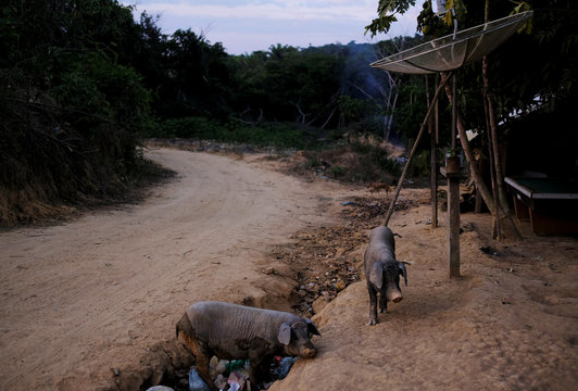 The Wider Image: Brazilians toil for gold in illegal Amazon mines