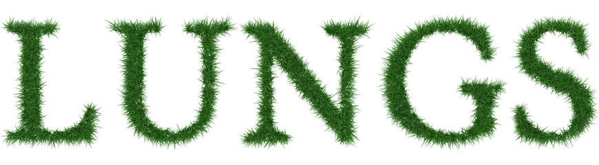 Lungs - 3D rendering fresh Grass letters isolated on whhite background.