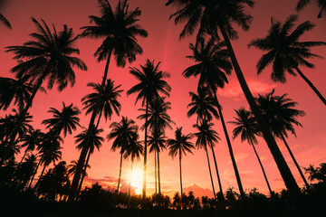 Silhouette Coconut Palm trees on tropical beach with colourful sunset sky in twilight time at Phuket province, Southern of Thailand.