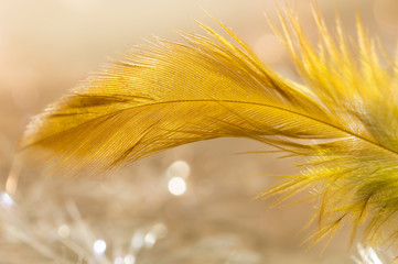 Bird feather gold color closeup. selective focus