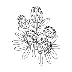 vector contour illustration of exotic flower bouquet