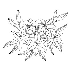 vector contour illustration of lily bouquet