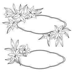 vector contour illustration of lily bouquet frame