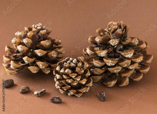Tres Piñas Con Piñones Piñas Recién Caídas Del árbol Llenas De