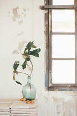 Medlar and a demijohn with a plant  in a vintage dream space