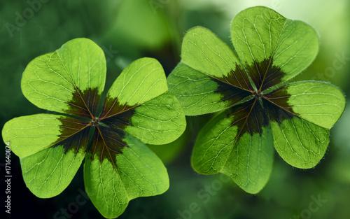 Vierblättrige Kleeblätter
