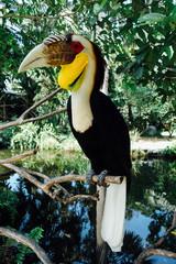 Amazing Bird