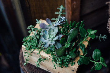 Wooden Box full of Green Succulents