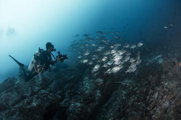 A man underwater shooting shoal of jack fish in the ocean