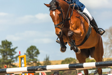 Show Jumping Horse Head Poles Rider Closeup Action
