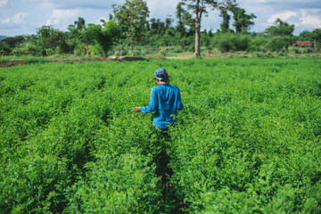 Blue woman in the indigo plantation