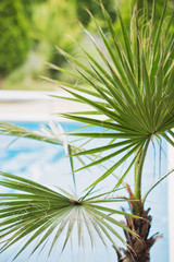 Palm tree in front of a pool