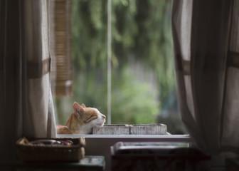 Ginger cat sleeps leaning against flower pots on windowsill