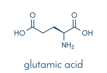Glutamic acid (l-glutamic acid, Glu, E) amino acid and neurotransmitter molecule. Skeletal formula.