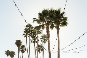 Palm trees and patio lights
