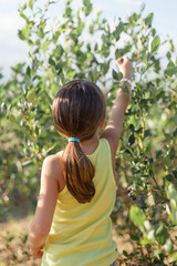 A girl reaching high to pick fresh blueberries