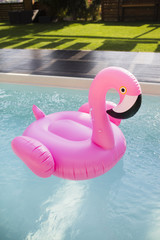 Flamingo float in the pool