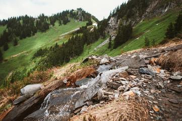 Mountain Trail in the Cascade Mountains of Washington