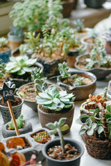 Succulent plants in store