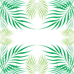 Graphic Leaves of coconut abstract pattern background Green - light green on white background, Vector illustration
