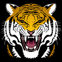 Angry tiger head; hand drawn vector graphic. Colored variant on black square background.