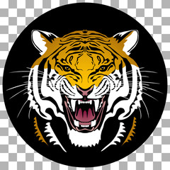 Angry tiger head; hand drawn vector graphic. Circle shaped colored variant on transparent background.