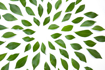 Wall Mural - green leaves frame on white background. flat lay. Tropical plant green leaf spring time, environment concept. Close up studio photography.