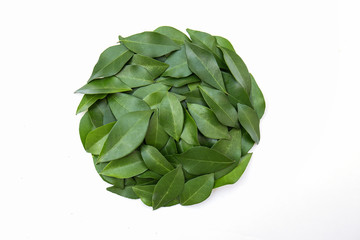 Wall Mural - Green leaves in pile of circle shape on white background. Banner flat lay. Tropical plant green leaf spring time, environment save the world concept.