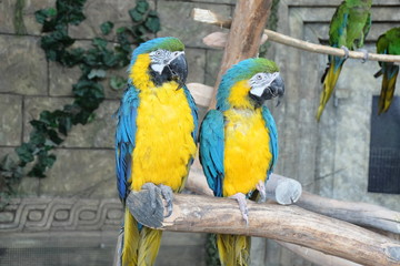 parrots on a stick