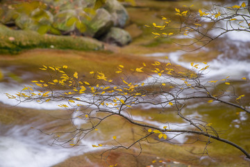 Autumn yellow forest and stone river stream.