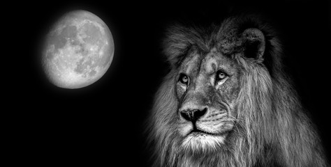 Wall Mural - Black  and white portait lion with moon
