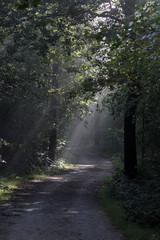 Sonnenstrahlen durch das Blätterdach im Teutoburger Wald