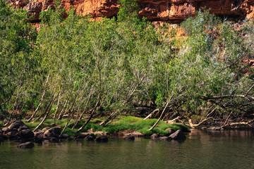 Vegetation blocking the river path at Katherine Gorge, NT, Australia