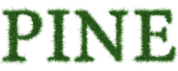 Pine - 3D rendering fresh Grass letters isolated on whhite background.