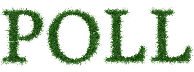Poll - 3D rendering fresh Grass letters isolated on whhite background.